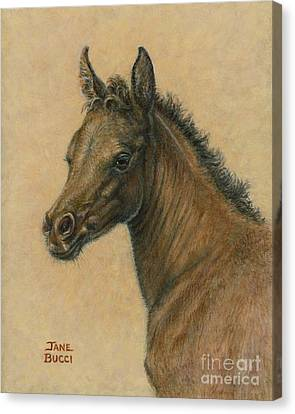 Bay Colt Canvas Print by Jane Bucci