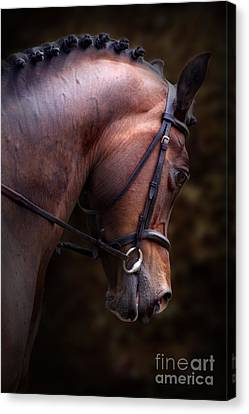 Bay Horse Head Canvas Print by Ethiriel  Photography