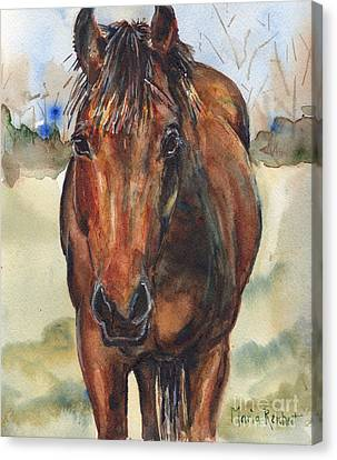 Bay Horse Canvas Print - Bay Horse Painting In Watercolor by Maria's Watercolor