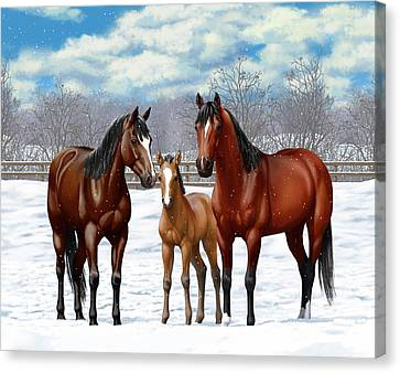 Bay Horses In Winter Pasture Canvas Print