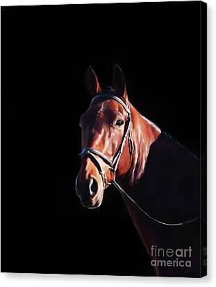 Bay Horse Canvas Print - Bay On Black - Horse Art By Michelle Wrighton by Michelle Wrighton