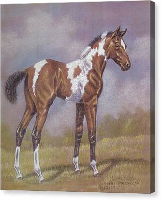 Bay Paint Foal Canvas Print by Dorothy Coatsworth
