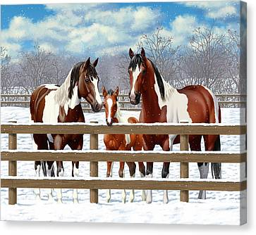 Bay Paint Horses In Snow Canvas Print by Crista Forest