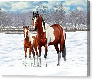 Bay Pinto Mare And Foal In Snow Canvas Print by Crista Forest