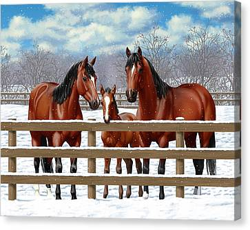 Bay Quarter Horses In Snow Canvas Print