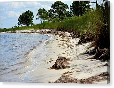 Bay Shore Canvas Print by Tamra Lockard