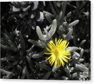 Canvas Print featuring the photograph Be Different by Lynn Geoffroy