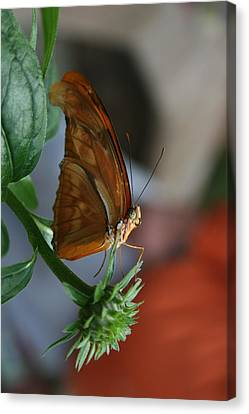 Canvas Print featuring the photograph Be Happy by Cathy Harper