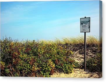 Canvas Print featuring the photograph Be Kind To The Dune Plants by Madeline Ellis