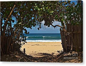 Beach Access Pupukea Canvas Print by Paul Topp