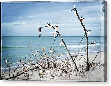 Beach Art - Sea Shrine - Sharon Cummings Canvas Print by Sharon Cummings