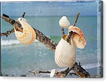 Beach Art - Seashell Shrine - Sharon Cummings Canvas Print by Sharon Cummings
