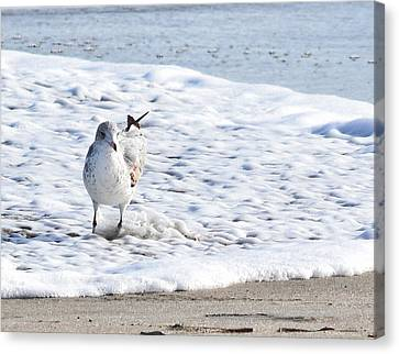 Beach Bather Canvas Print by Maria Keady
