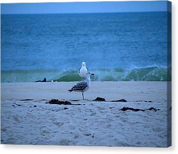 Canvas Print featuring the photograph Beach Birds by  Newwwman