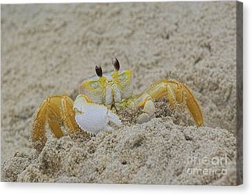 Beach Crab In Sand Canvas Print