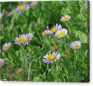 Flower Canvas Print - Beach Daisies No. 3-1 by Sandy Taylor