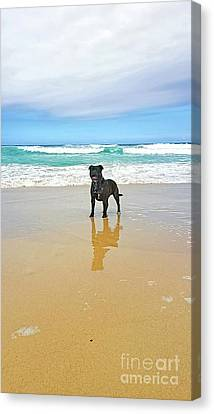Canvas Print featuring the photograph Beach Dog And Reflection By Kaye Menner by Kaye Menner
