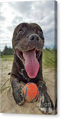 Canvas Print featuring the photograph Beach Dog - More Play? By Kaye Menner by Kaye Menner