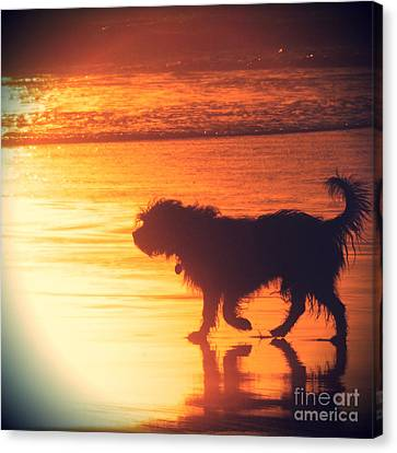 Beach Dog Canvas Print by Paul Topp