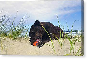 Canvas Print featuring the photograph Beach Dog - Rest Time By Kaye Menner by Kaye Menner