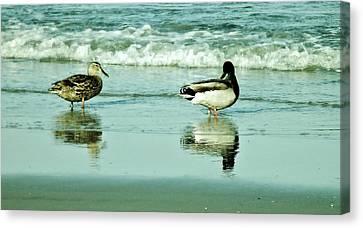 Beach Ducks Canvas Print
