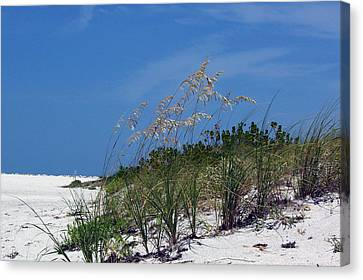Beach Grass 3 Canvas Print by Evelyn Patrick