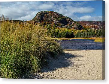 Beach Grass Canvas Print by Brent L Ander