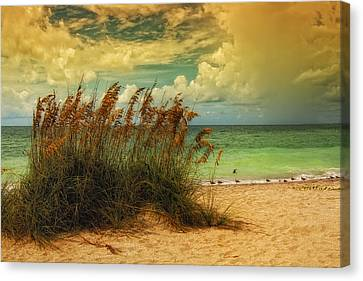Beach Grass Canvas Print by Gina Cormier