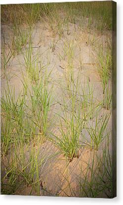 Beach Grasses Number 10 Canvas Print