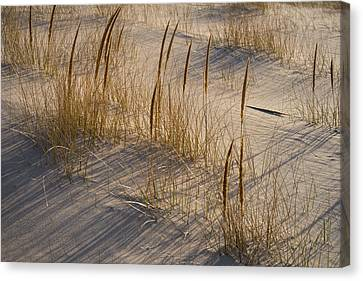Beach Grasses Canvas Print by Steve Gadomski