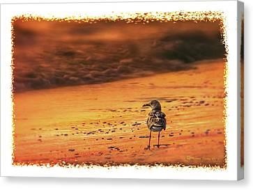 Beach Gull Canvas Print by Marvin Spates