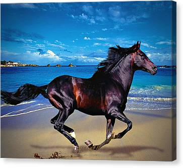 Canvas Print featuring the photograph Beach Horse by Robert Smith