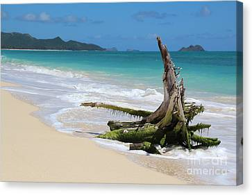 Beach In Hawaii Canvas Print by Anthony Jones
