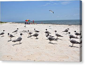 Canvas Print featuring the photograph Beach Party by Jan Amiss Photography