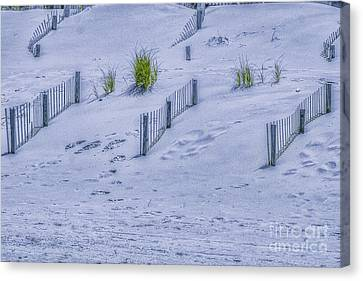 Beach Sand Dunes And Fence Canvas Print by Randy Steele