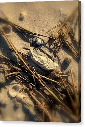 Beach Still Life Canvas Print by Susanne Van Hulst