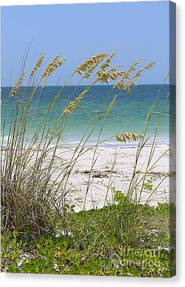 Beach Through Sea Oats Canvas Print