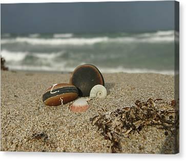 Beach Treasures 1 Canvas Print by Kimberly Mohlenhoff