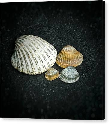 Canvas Print featuring the photograph Beach Treasures  by Karen Stahlros