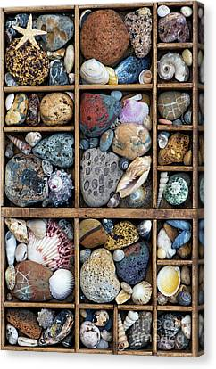 Canvas Print featuring the photograph Beach Treasures by Tim Gainey