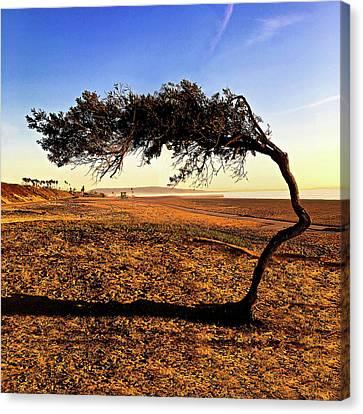 Beach Tree Canvas Print by Howard Dando