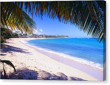 Beach View Under A Palm Tree Canvas Print by George Oze