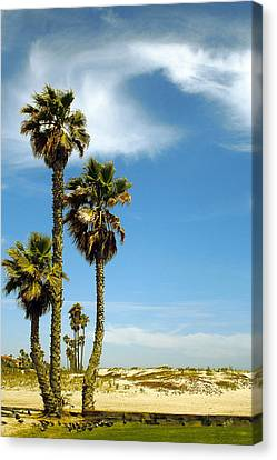 Beach View With Palms And Birds Canvas Print by Ben and Raisa Gertsberg