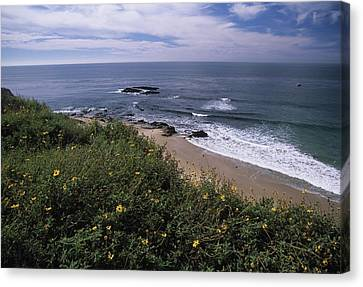Beach Waves And Wildflowers Canvas Print by Don Kreuter