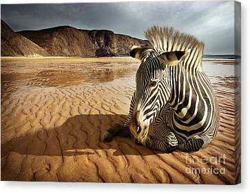 Beach Zebra Canvas Print by Carlos Caetano