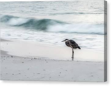 Beachbird Canvas Print