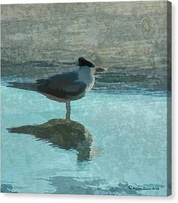 Beachcomber Canvas Print by Marvin Spates