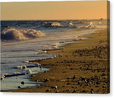 Beachcomber  Canvas Print by Dianne Cowen
