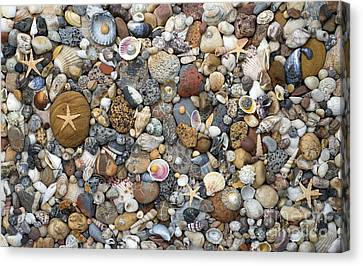 Beachcombing Pattern Canvas Print