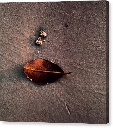 Beached Leaf Canvas Print by Brent L Ander